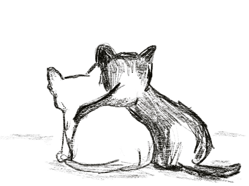 sketch of two cats, black cat with forearm over shoulders of white cat
